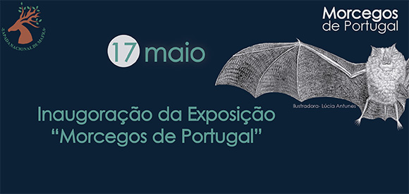 Morcegos de Portugal. - ph. DR