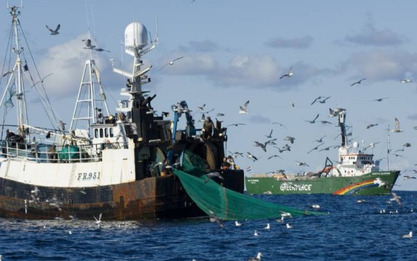 Pesca por arrasto. - ph. Greenpeace
