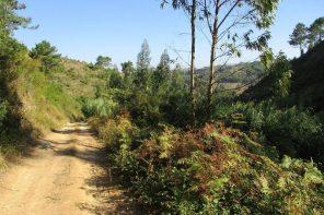 Caminhada entre o Sobreiro e o vale do Rio Cuco