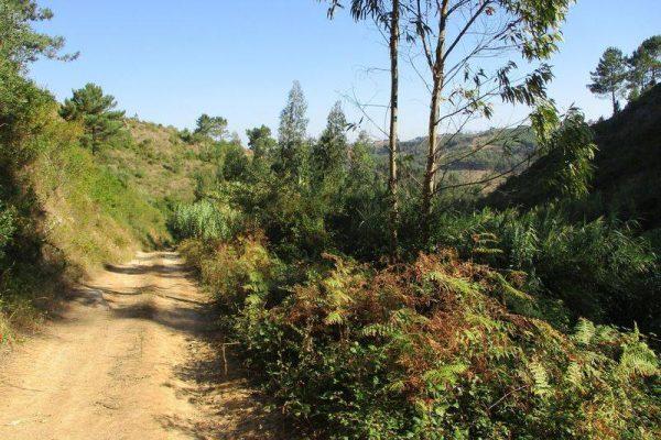 Caminhada Sobreiro e Vale do Cuco - ph. DR