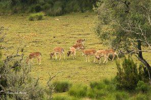 Observar as crias na Tapada de Mafra