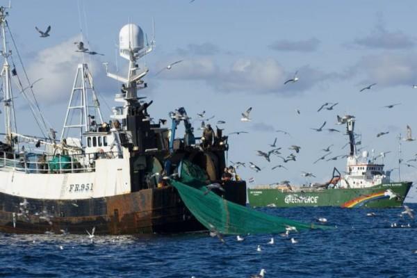 Pesca por arrasto. - ph. Greenpeace