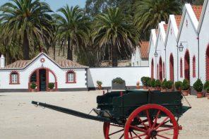 Quinta dos Leitões promotes courses on Portuguese wines
